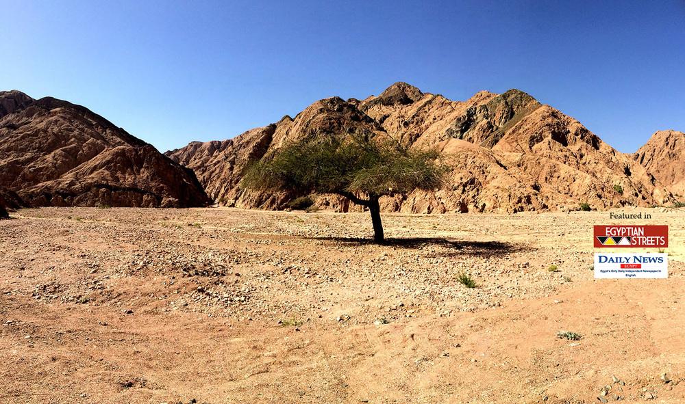 The Bedouin Way