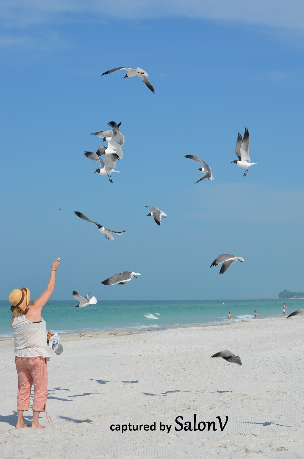 Mom and gulls.jpg