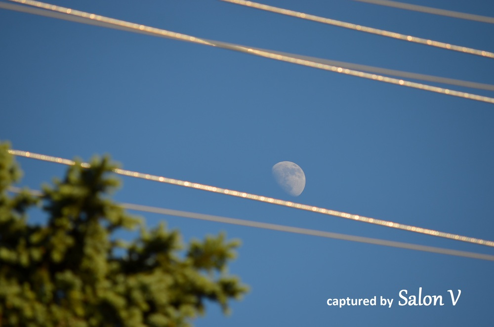 Moon on the Wire.jpg