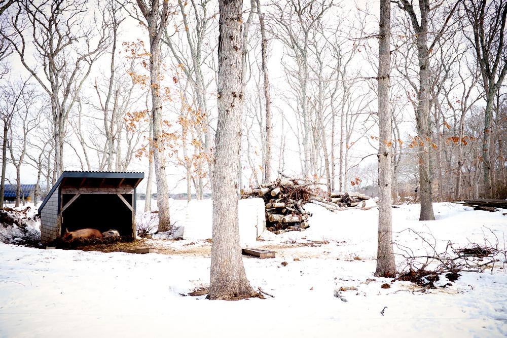 winter_031.jpg