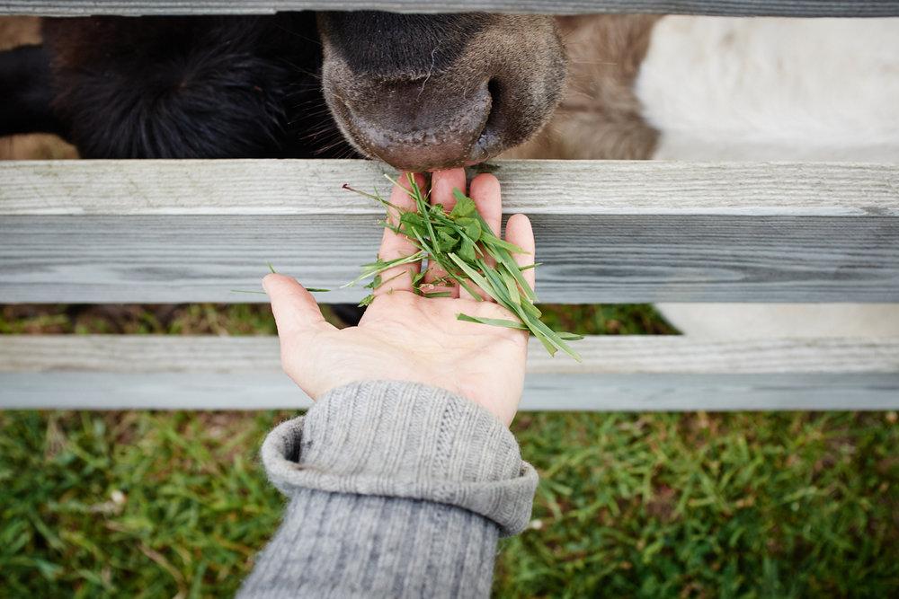 FarmTours_001.jpg