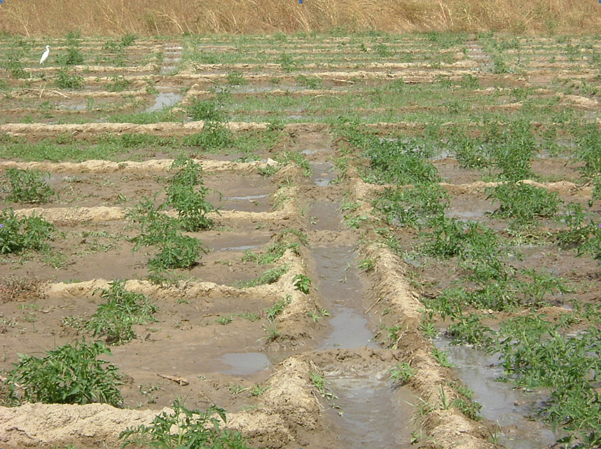 Tambaqui Aquaculture besides Golf in addition Sunflower besides La Hm Drought Grass Html 20150723 Htmlstory furthermore Process. on drip irrigation