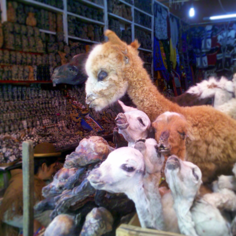 Dried llama fetuses for sale in La Paz, Bolivia.