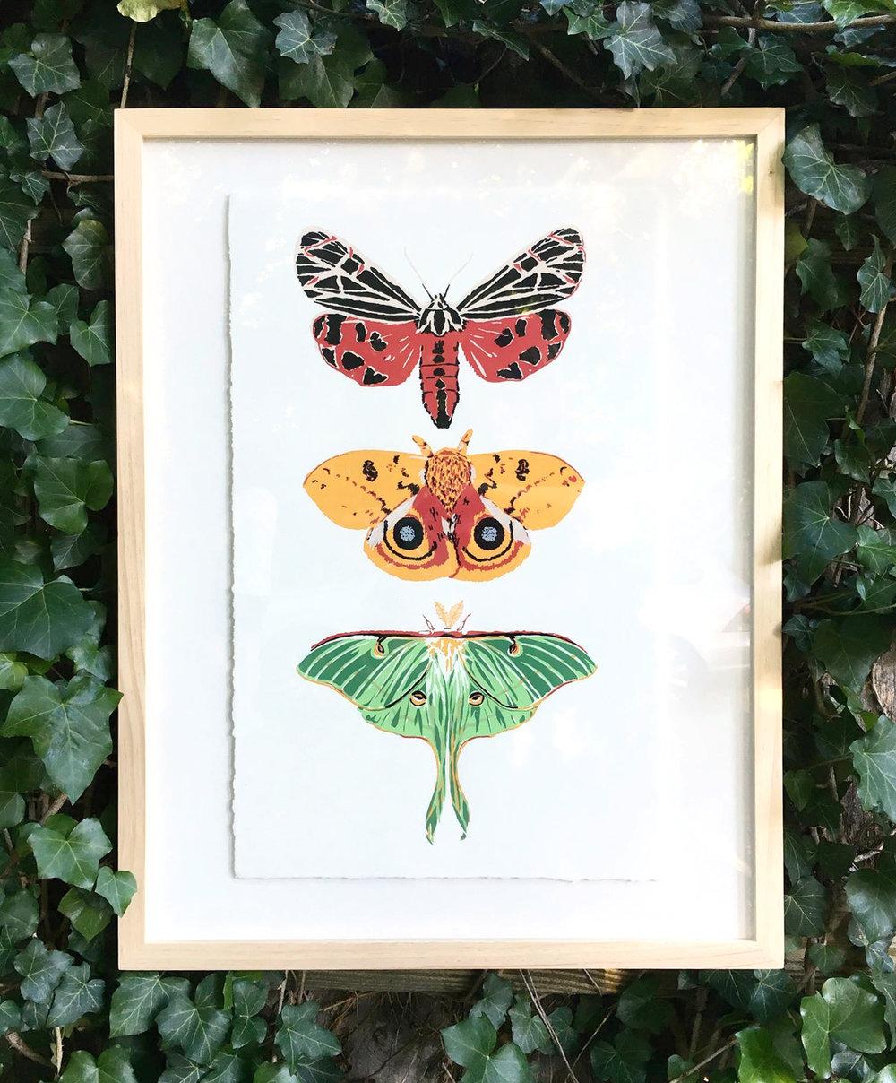 MothTrio.jpg