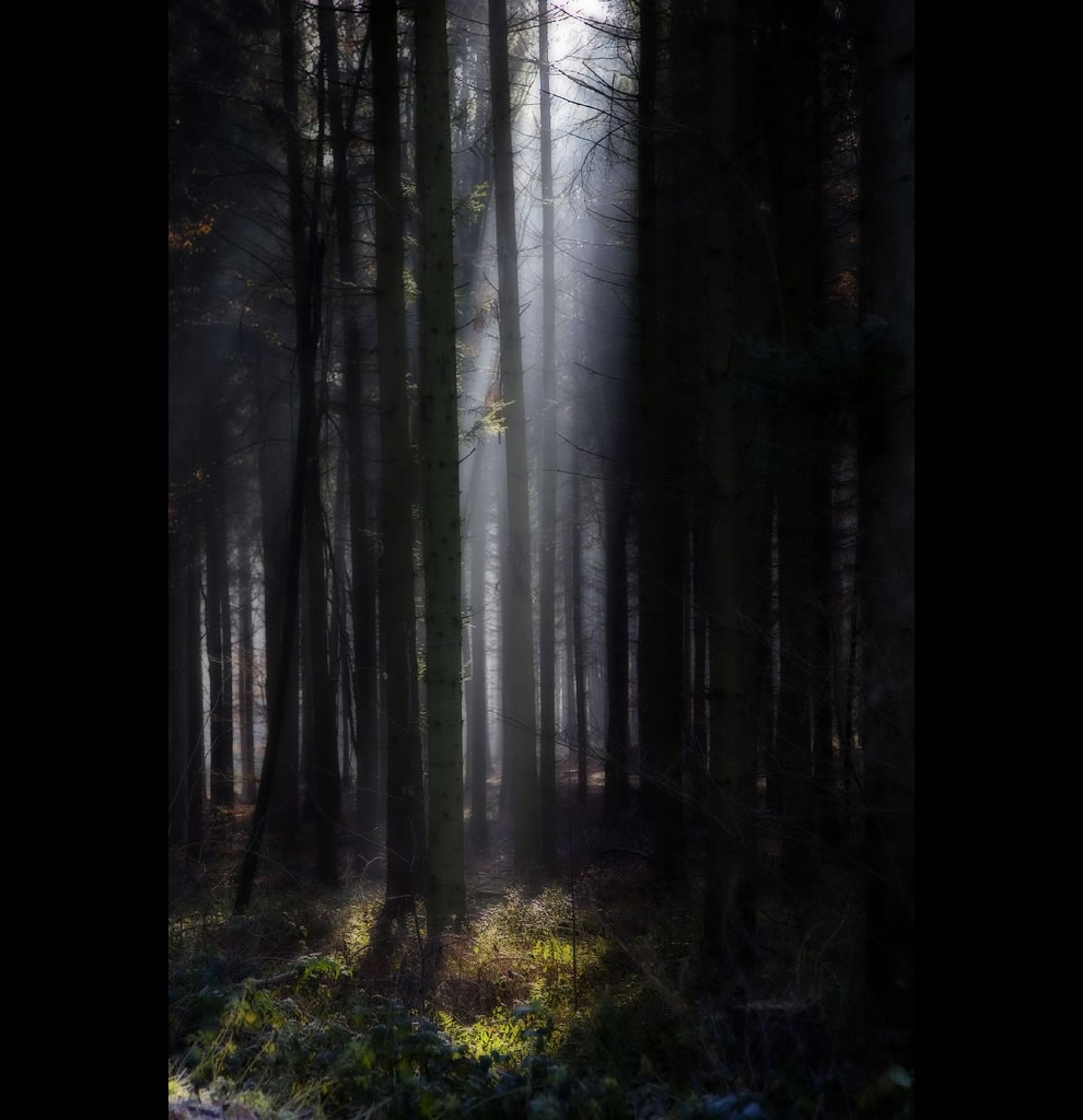 Forest-of-Gondor-BLACK-FOREST-.jpg