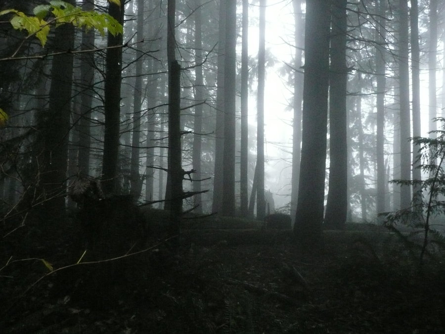Foggy_Forest_by_Track_Maidens.jpg