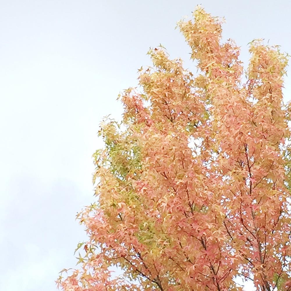 graceline illustration + calligraphy | autumn thoughts