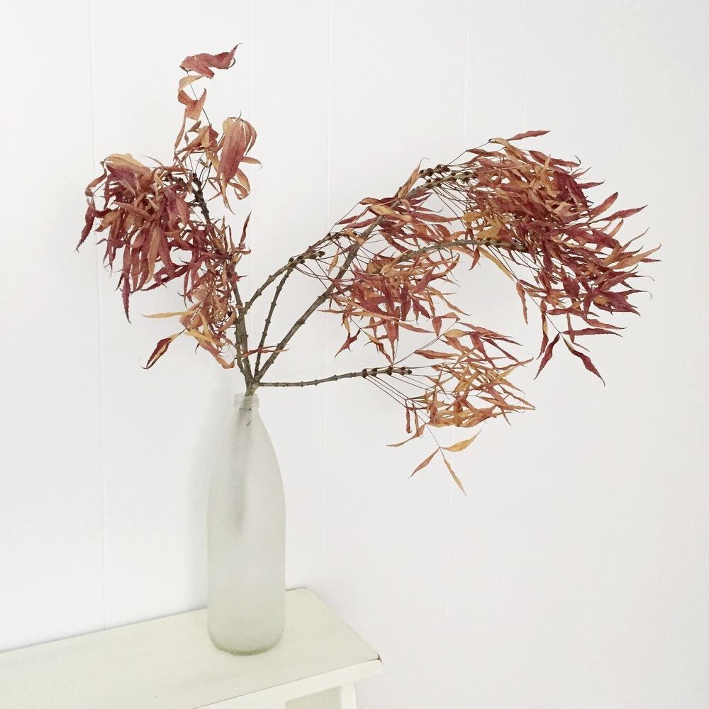 graceline illustration + calligrpahy | autumn thoughs