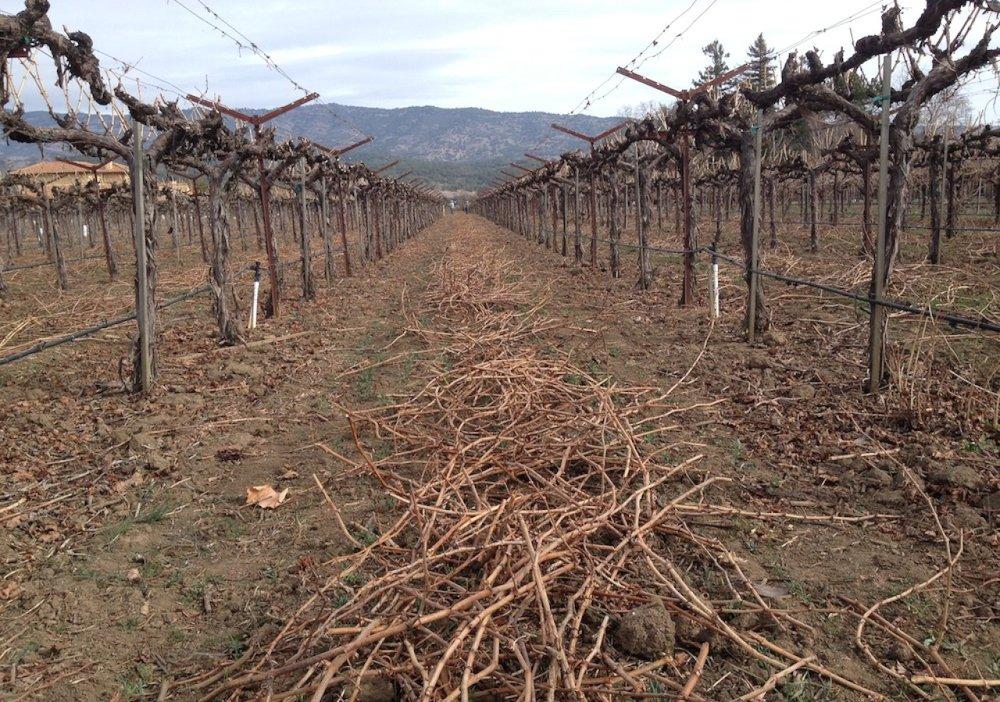 winedrought.jpg