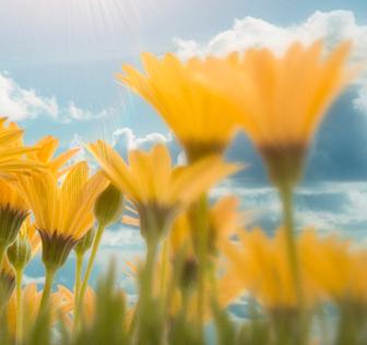 hp_flowers_sm.jpg