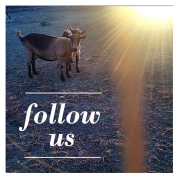 follow-chivas-instagram-goat.jpg