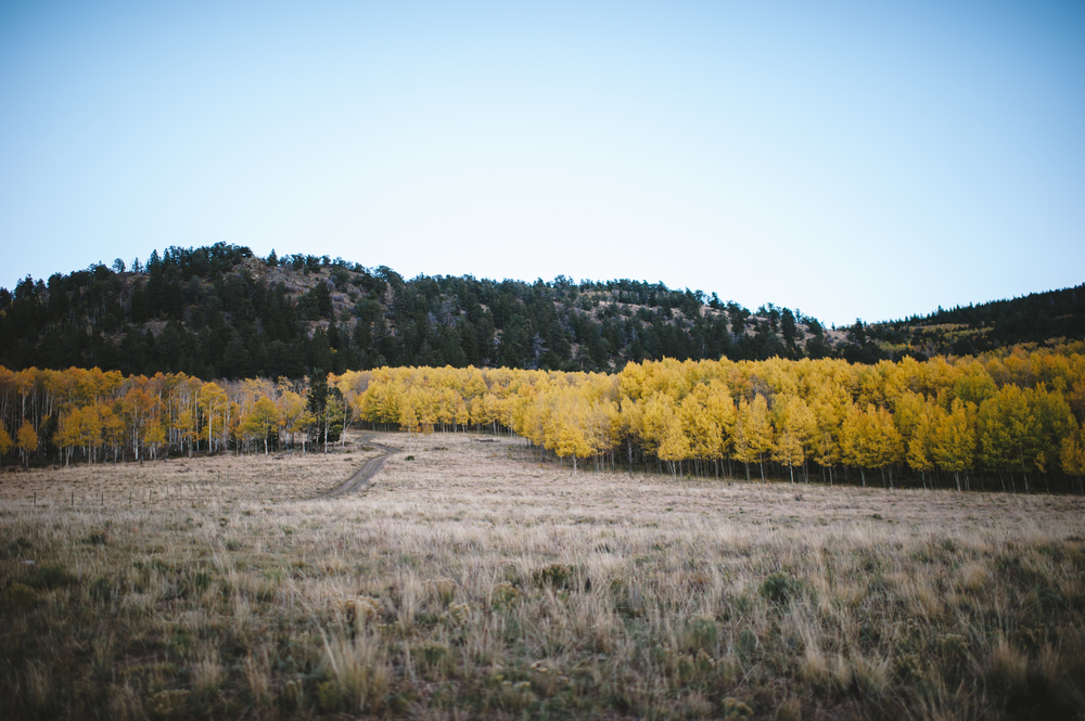 Aspen Ridge-018.jpg