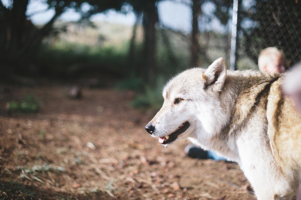 Mission Wolf-001.jpg