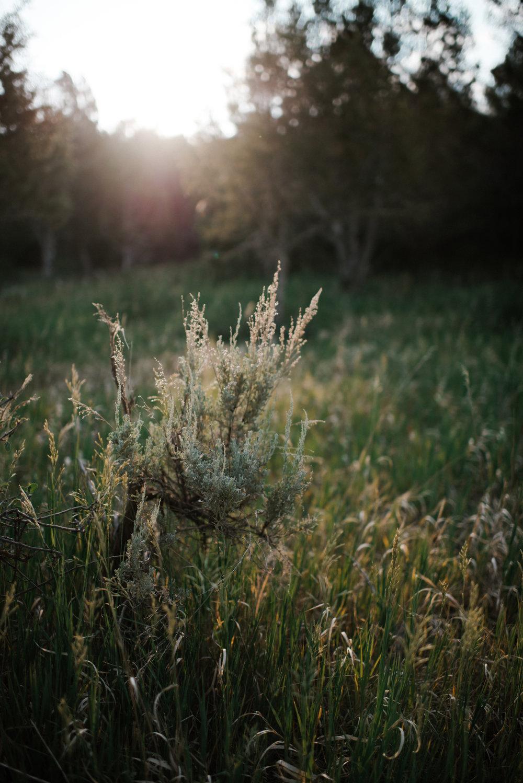 Cedar Ridge Ranch-4.jpg