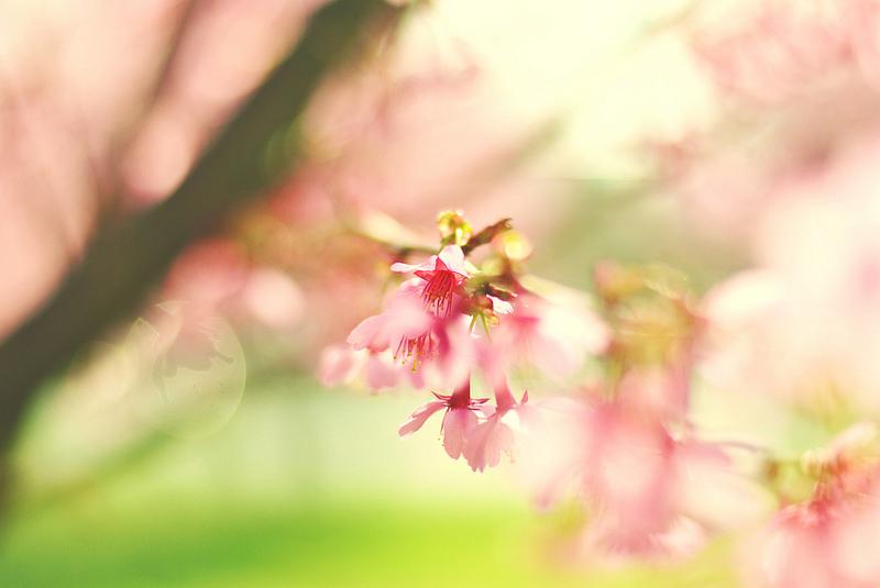 nature7.jpg