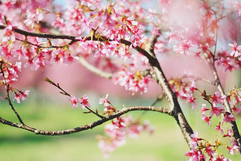 springtime [+4!].jpg