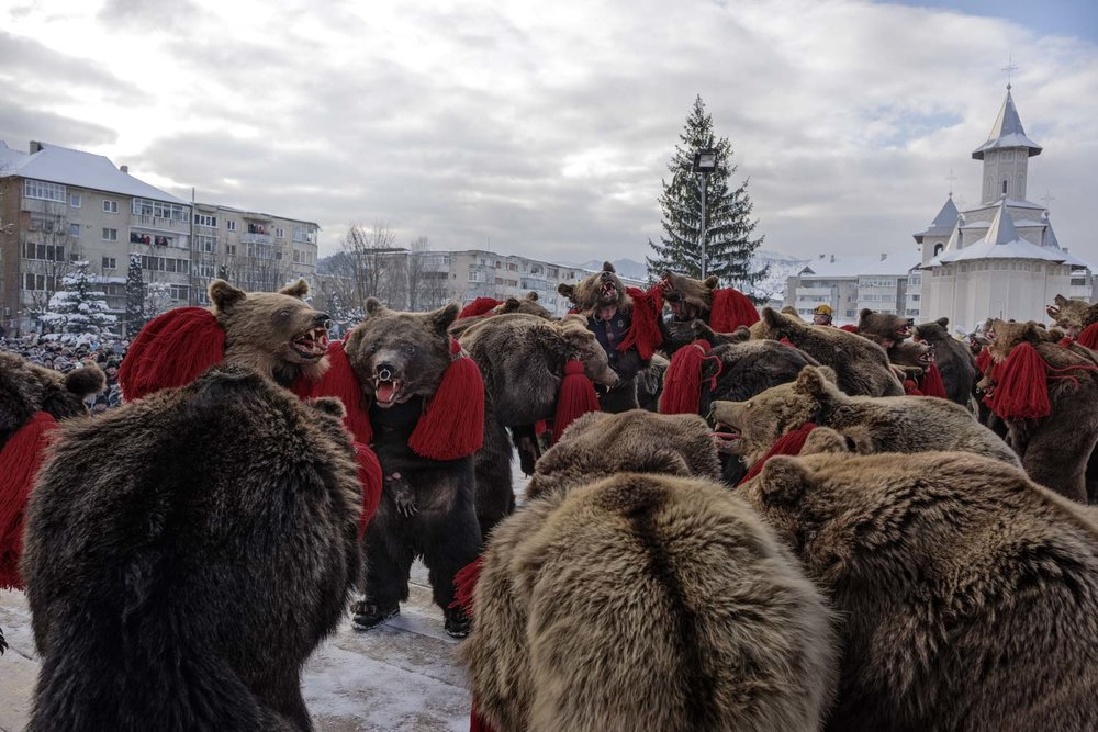 A troupe of bears performs in central Comăneşti during the town's annual Bear Parade and Competition. December 30, 2014. Comăneşti town, Bacău county, Romania.