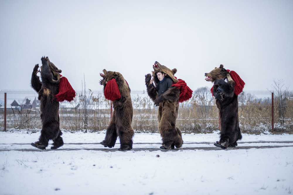 Dumitru Toloaca's troupe of bears dance their way single-file through Comăneşti town, stopping at private homes where they've been invited to perform. December 28, 2014. Comăneşti town, Bacău county, Romania.