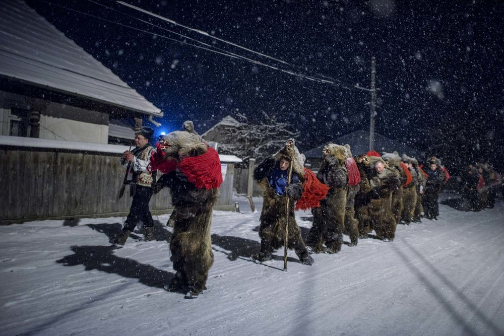 Toloaca's troupe of bears dance their way, single-file into the night, through Asău village, stopping at the private homes where they've been invited to perform. December 28, 2014. Asău village, Bacău County, Romania.