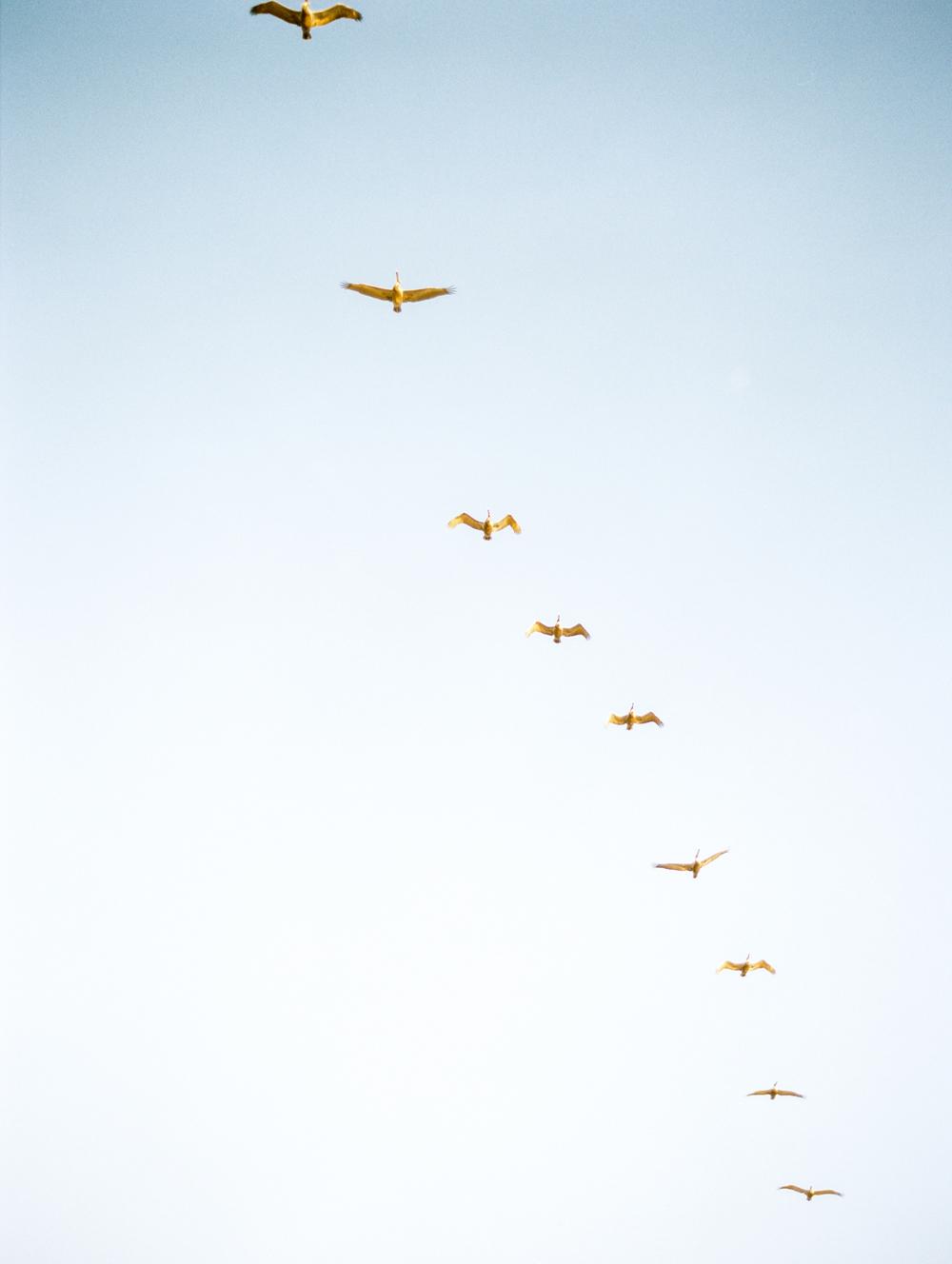 birdsofthesea.jpg
