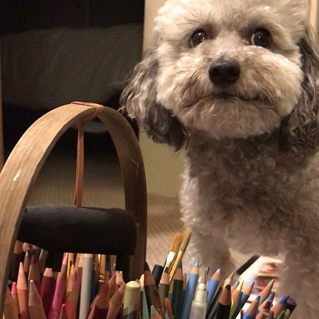 Anxious about which color to use. . . . . . . . #womenofillustration  #maltipoo #dogsofinstagram  #illustratorofinstagram #cute  #colorpencils #dowhatyoulove