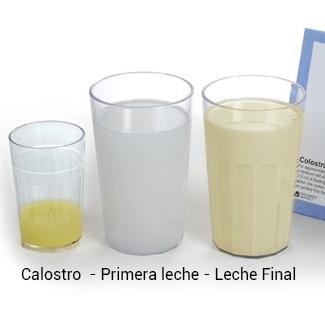 Noten el color del calostro es bastante más amarillo que la leche y es poquito. Las demás leches no necesariamente son así pero es para que vean como la leche de final contiene más grasa que la de inicio.