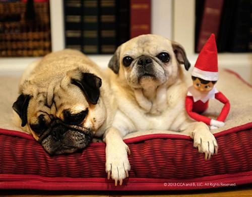 Derechos:  Elf on the shelf