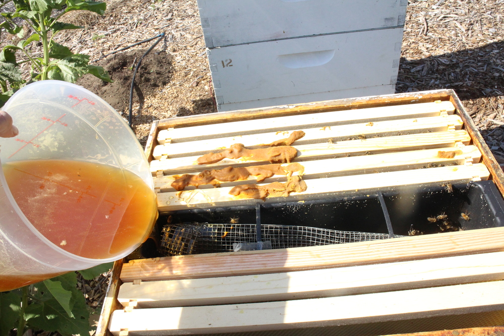 Pollen substitute and honey fed to the bees.  Note follower board just to the right of the feeder to limit the hive size.