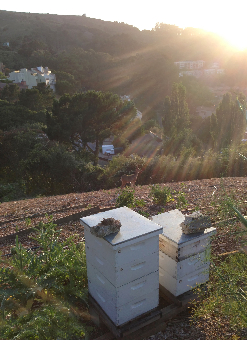 Petition to make beekeeping free and legal