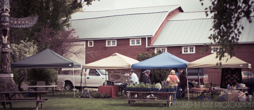 Buckley Country Market by Captured By Katie Photography, Bonney Lake Photographer