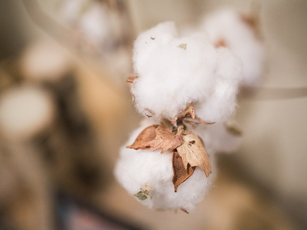 {046|365} M A C R O It's about as macro as I can get with my lenses. Doesn't this cotton remind you of Spring? Kind of crazy that we have 70 degree weather today and chance of snow tomorrow. That's life in Texas for ya!  Surprisingly this was my popular photo of February.