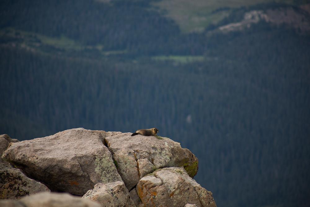 RMNP, Colorado