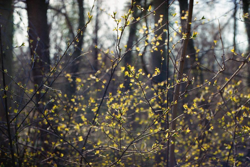 Mirjam Hümmer – Springtime