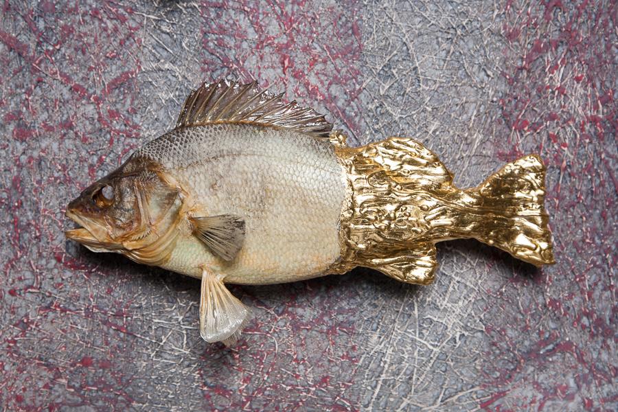 Goodman Fish Closeup.JPG