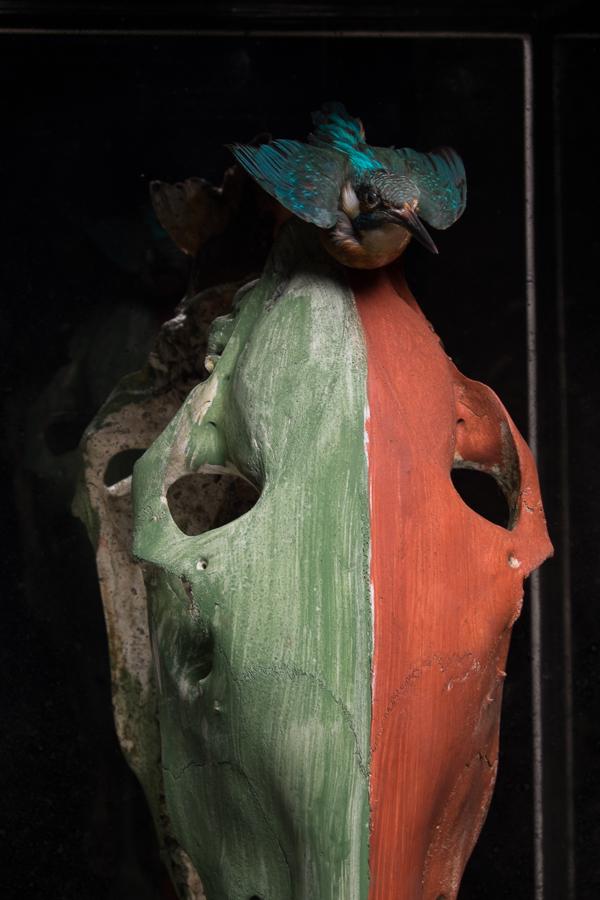 Crazy Horse skull kingfisher.jpg