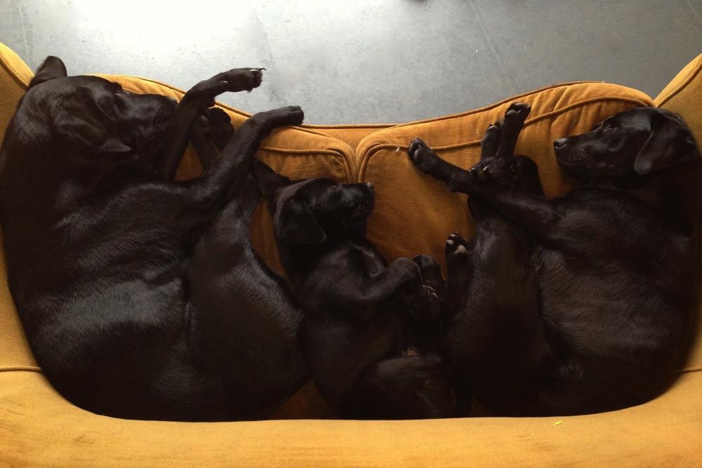 Dogs.jpeg