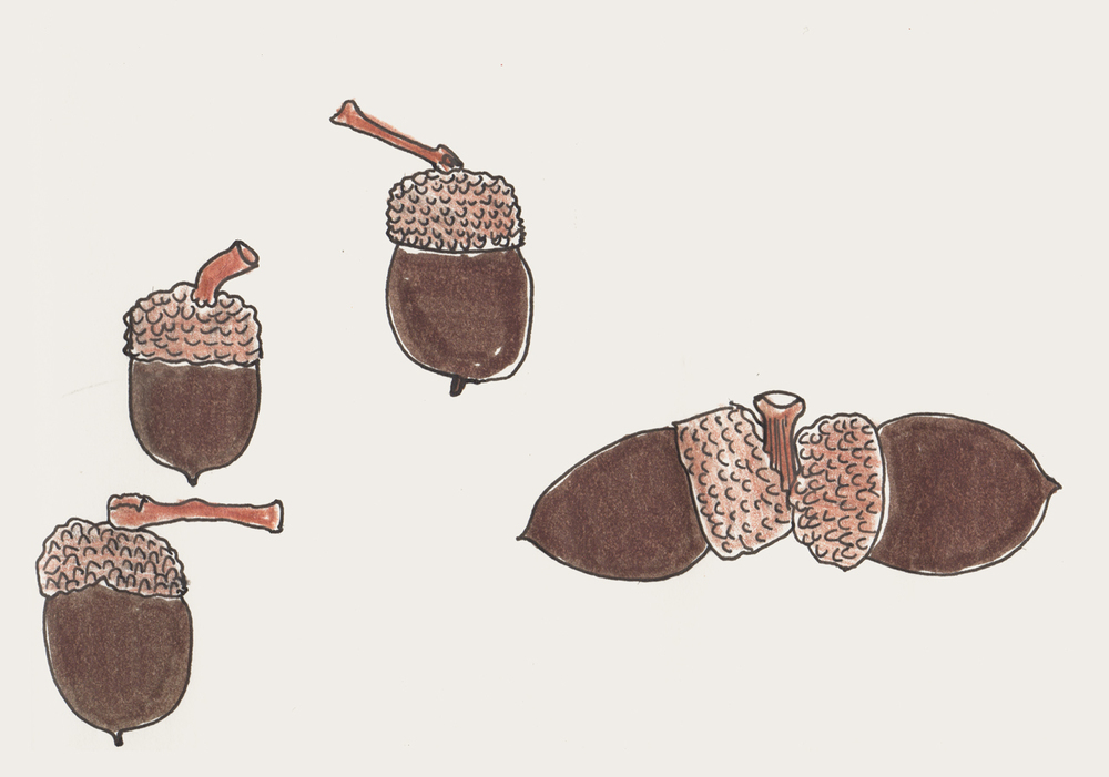 acorns.jpeg