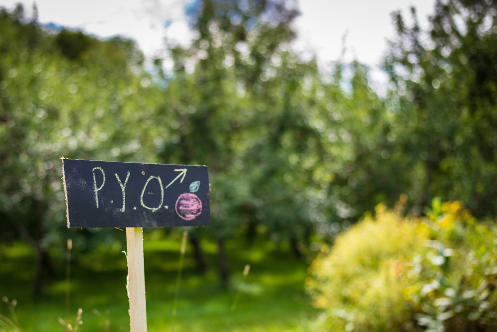 PYO Apples begins Saturday 9/8/18!  See you then!  Photo courtesy Jaime Lynn Photography