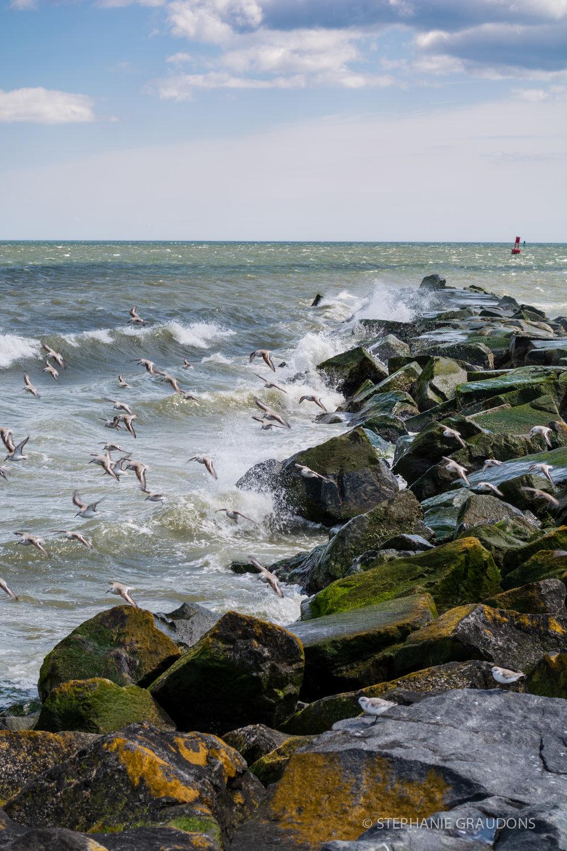 Delaware Coast