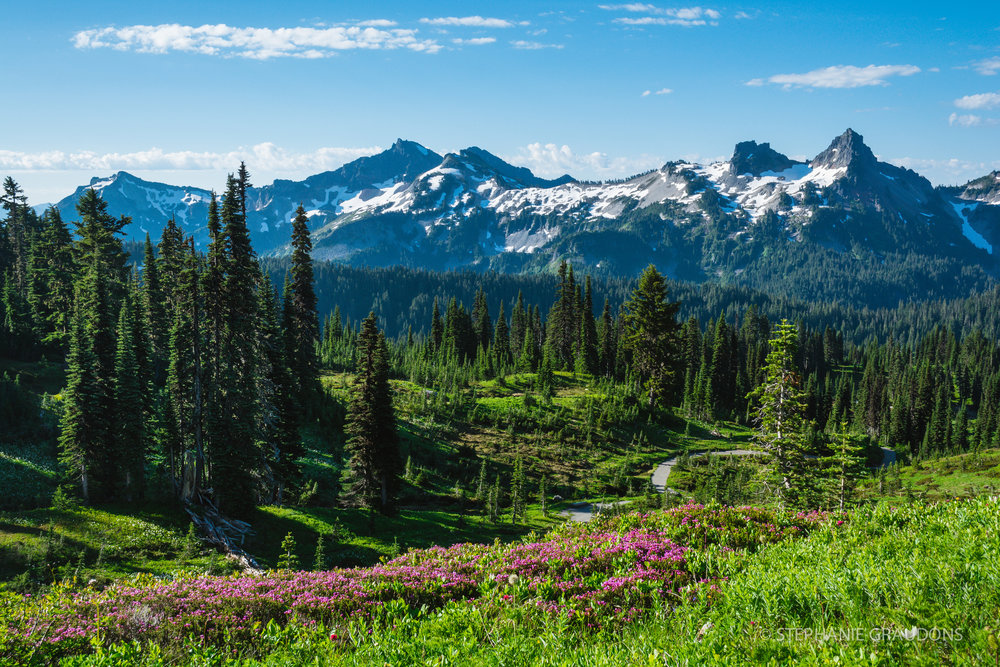 Tatoosh Range from Paradise