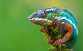 The Karma Chameleon