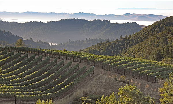 Vineyard_Coastal_Fog_2400x1442.jpg