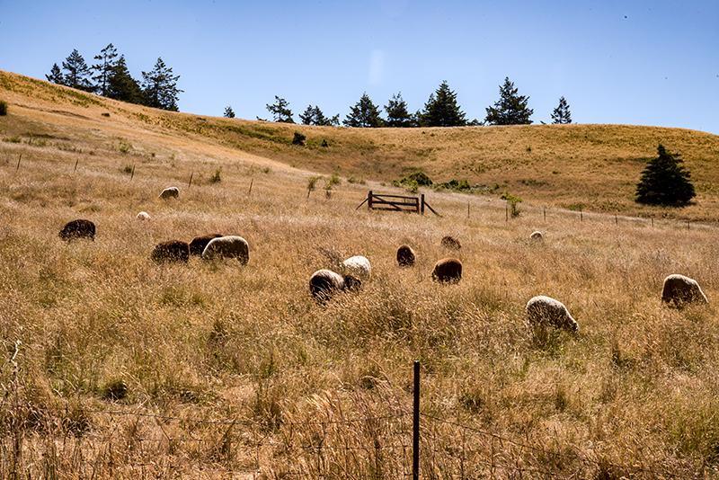 Bodega Pastures