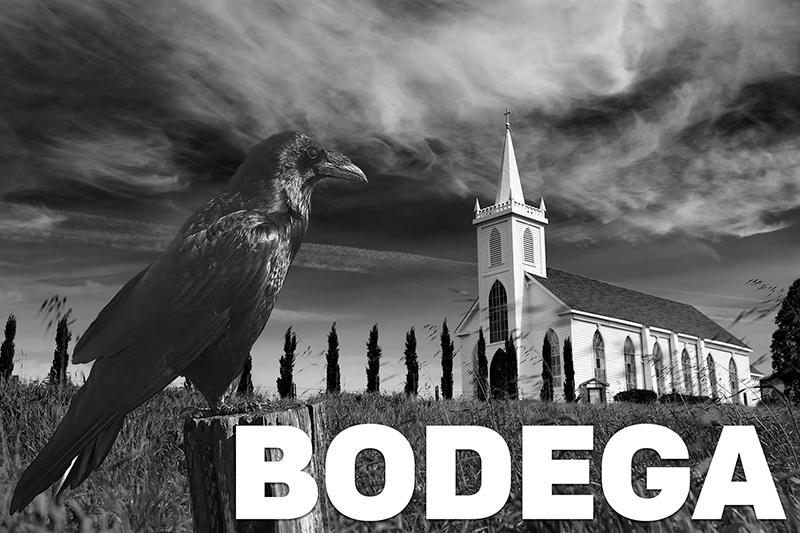 bodegabirds3.jpg