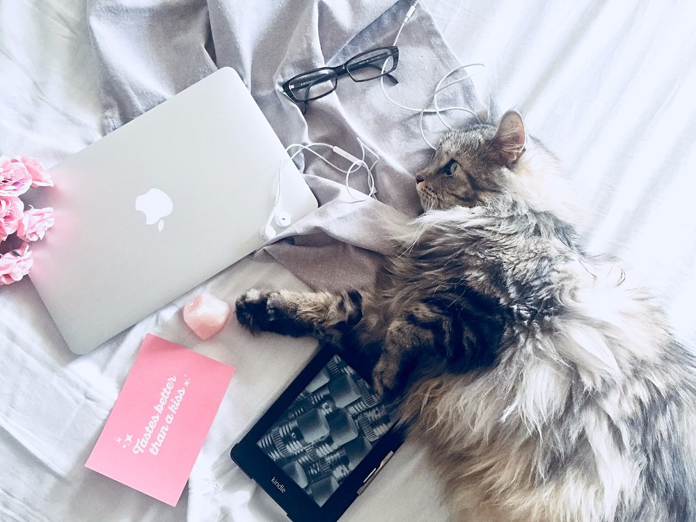 beauty_and_the_nature_fluffy_cat_mac_book_kindle.jpg