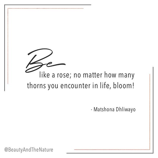 Be like a rose... Bloom, no matter what! ⠀⠀⠀⠀⠀⠀⠀⠀⠀ ⠀⠀⠀⠀⠀⠀⠀⠀⠀ #lawofattraction #lawofattractionquotes #lifestyleblogger #veganblogger #bblogger #vegangirl #positivemind #highvibes #goodvibesonly #bossbabe #spiritualbosslady #livingthegoodlife #holisticliving #divinefeminine #livinginfullbloom #qotd #inspiration #motivationalquote #bloomandgrow #spiritjunkie #manifesting #bloggerlife #bloombabe #selfloveclub #selfdevelopment #selfhelp #holisticblogger #selfgrowth