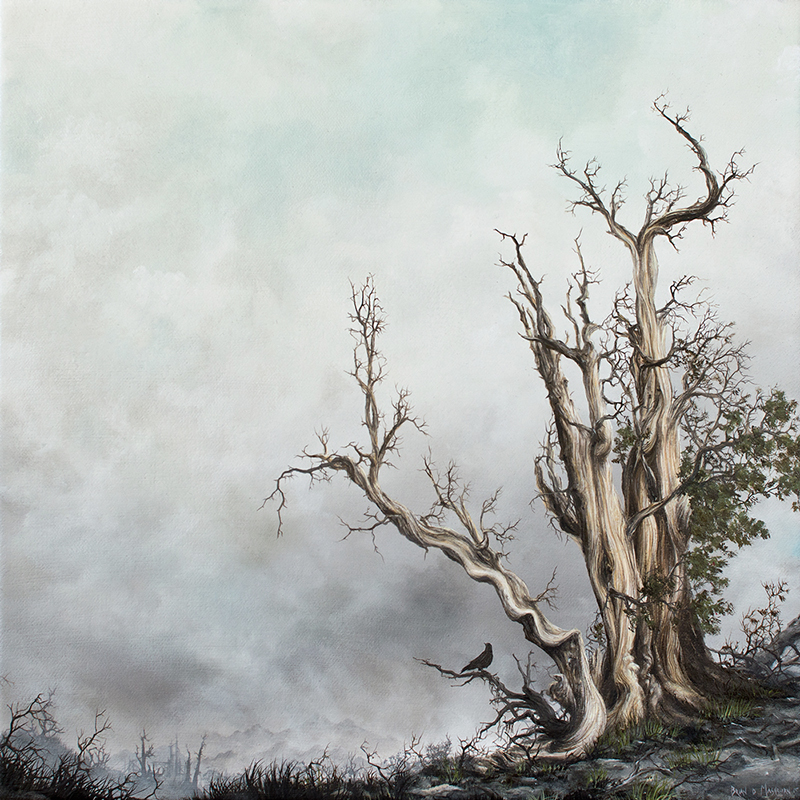 "BRISTLECONE PINE oil on canvas - 12"" x 12"" - 2015 LAX/LHR group show, Stolen Space Gallery, London"
