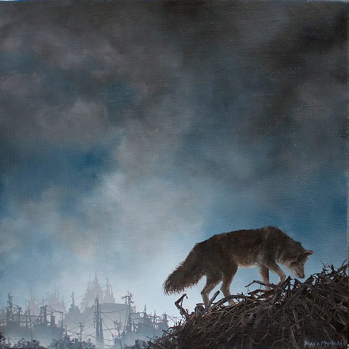 "COYOTE oil on linen - 7"" x 7"" - 2015"