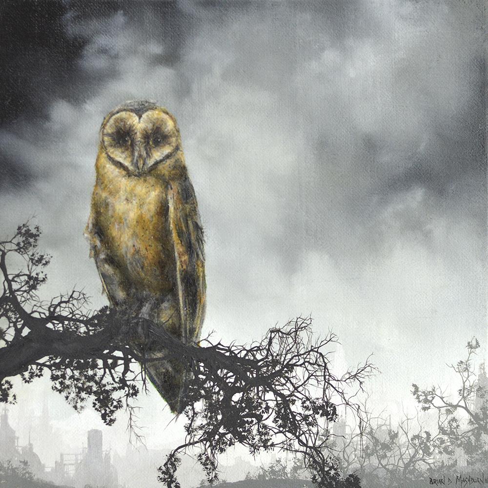 "dark-breasted barn owl 7"" x 7"" oil on linen"