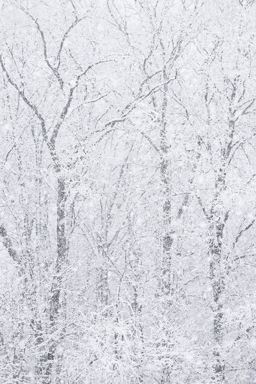 """Whiteout"" - A forest during heavy snowfall. Manassas Battlefield, Virginia."